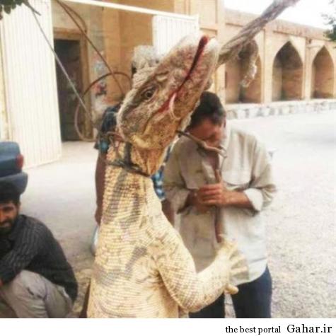 کشف موجود بسیار عجیب در اصفهان, جدید 1400 -گهر