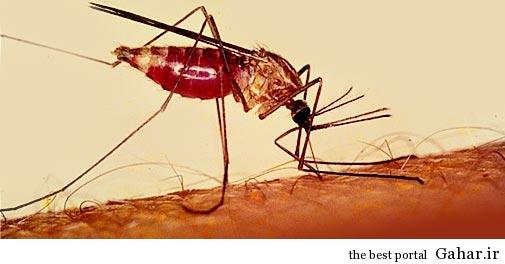 مرگ بار ترین بیماریها, جدید 1400 -گهر