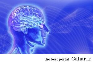 مغز انسان چگونه با کمآبی بدن مقابله میکند, جدید 1400 -گهر