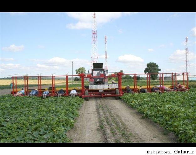 635408504323617908229415 399 شیوه عجیب درو محصولات کشاورزی !