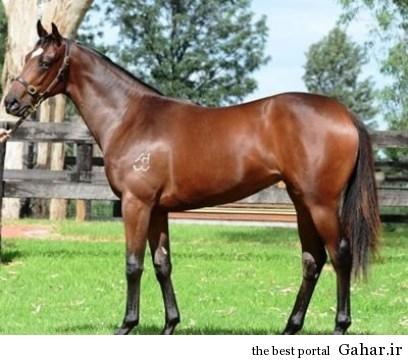اسب بسیار گران قیمت رونالدو, جدید 1400 -گهر