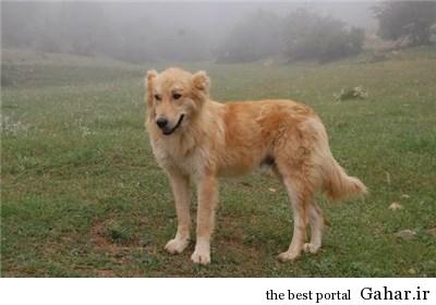 قیمت پوشک سگ : ۴۰ هزار تومان !!, جدید 1400 -گهر