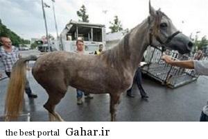 اسب های بوئینگ سوار به تهران آمدند, جدید 1400 -گهر
