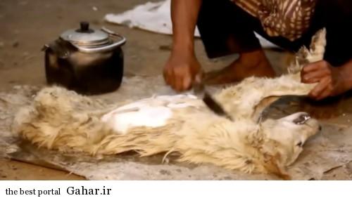 عکس های دلخراش از کباب سگ در اندونزی + ۱۸, جدید 1400 -گهر