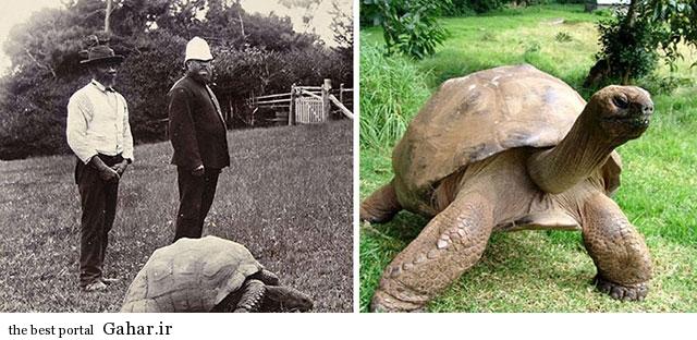 پیرترین موجود زنده جهان با ۱۸۲ سال سن, جدید 1400 -گهر