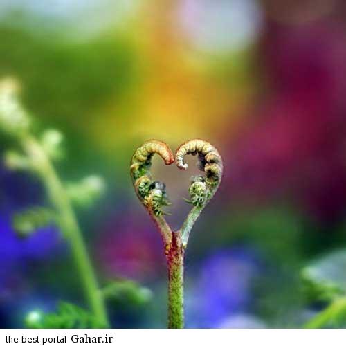 0.275753001376796268 irannaz com زیباترین عکس های عاشقانه اردیبهشت 94