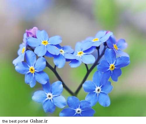 0.694320001376796263 irannaz com زیباترین عکس های عاشقانه اردیبهشت 94