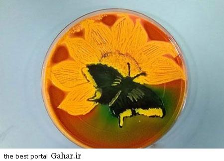 عکس های زیبا و شگفت انگیز از میکروب ها, جدید 1400 -گهر