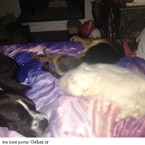 خوابیدن مایلی سایرس و حیوانات خانگی اش روی یک تخت!, جدید 1400 -گهر