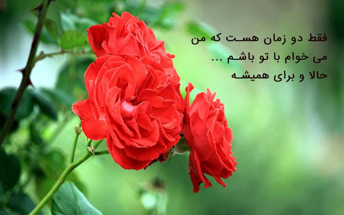 077241 Gahar ir عکس پروفایل گل های خاص و زیبا