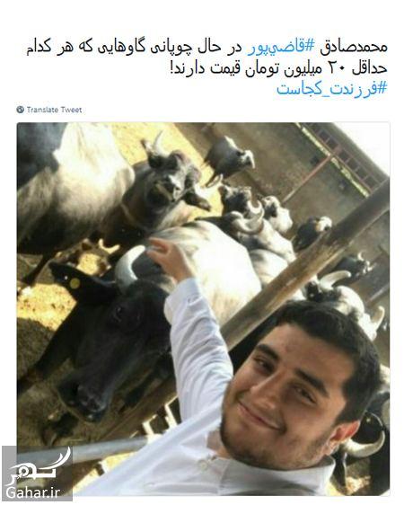 کنایه مردم به قاضی پور درباره چوپانی فرزندش با گاوهای ۲۰ میلیونی!, جدید 99 -گهر