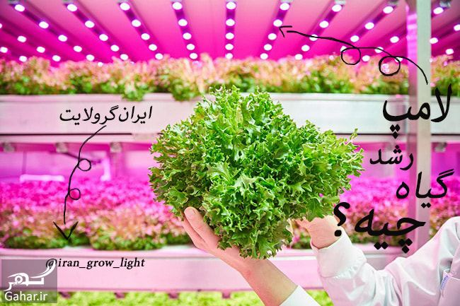 084328 Gahar ir چراغ رشد گیاه برای گیاه دوستانی که منازل کم نور دارند!