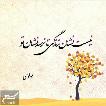 967202 Gahar ir اشعار مولانا در مورد عشق