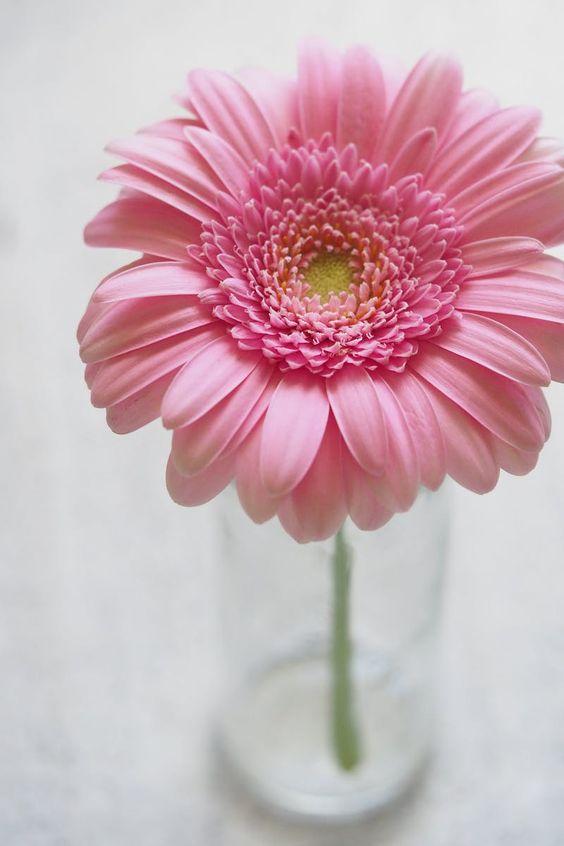 284595 Gahar ir عکس گل های زیبا برای پروفایل