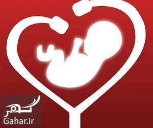 291649 Gahar ir زمان تشکیل قلب جنین
