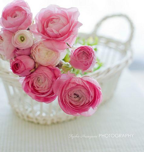407815 Gahar ir عکس گل های زیبا برای پروفایل