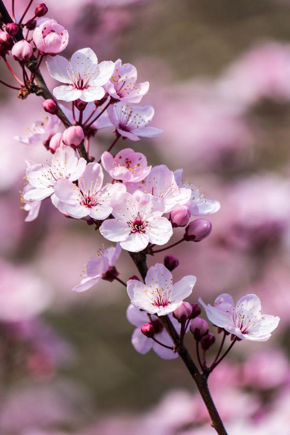 421745 Gahar ir عکس گل های زیبا برای پروفایل