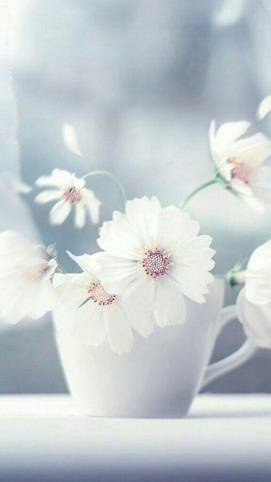 460699 Gahar ir عکس گل های زیبا برای پروفایل