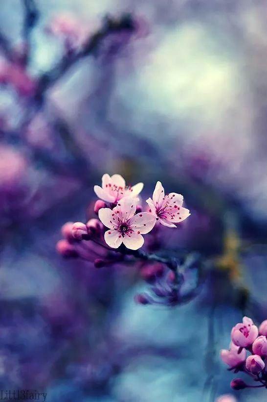 841717 Gahar ir عکس گل های زیبا برای پروفایل