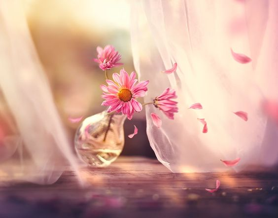 871930 Gahar ir عکس گل های زیبا برای پروفایل