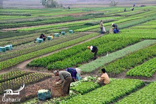 تبریک روز جهاد کشاورزی, جدید 1400 -گهر