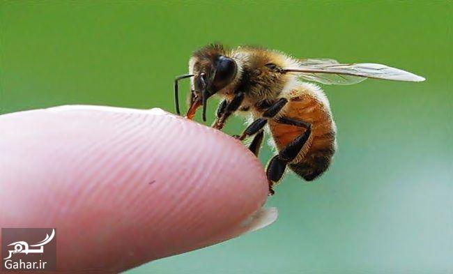 درمان نیش زنبورهای عسل, جدید 1400 -گهر