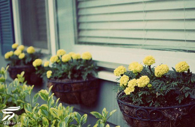 103959 Gahar ir 11 پیشنهاد جذاب برای گل کاری گلدان جلوی تراس و پنجره