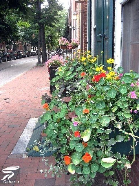 505670 Gahar ir 11 پیشنهاد جذاب برای گل کاری گلدان جلوی تراس و پنجره