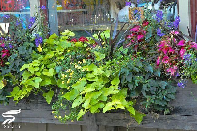 638626 Gahar ir 11 پیشنهاد جذاب برای گل کاری گلدان جلوی تراس و پنجره