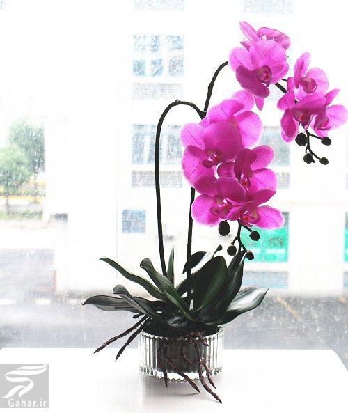 039348 Gahar ir بهترین گل ها برای هدیه دادن و مناسبت ها کدامند؟