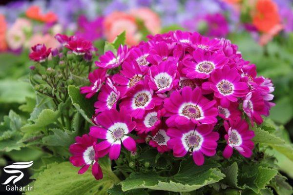 092387 Gahar ir کاشت گل های مناسب فصل زمستان
