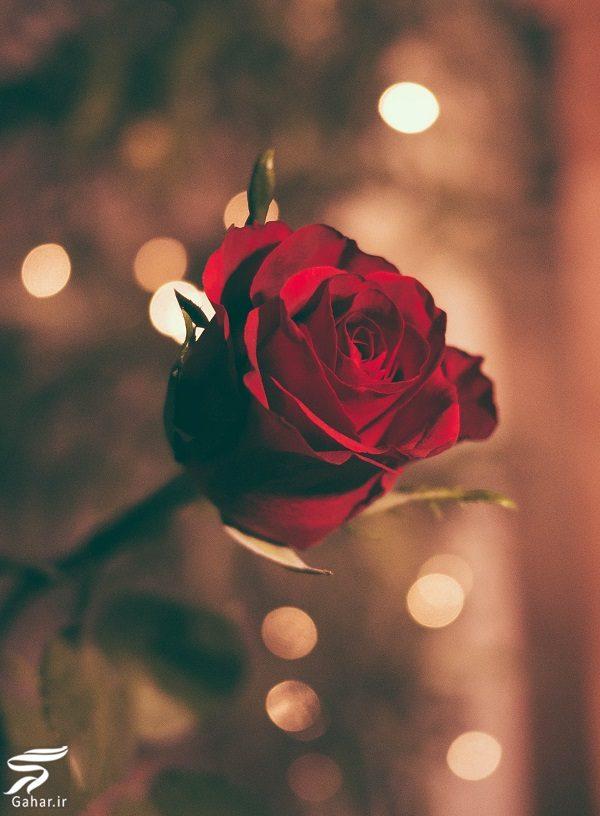 118438 Gahar ir بهترین گل ها برای هدیه دادن و مناسبت ها کدامند؟