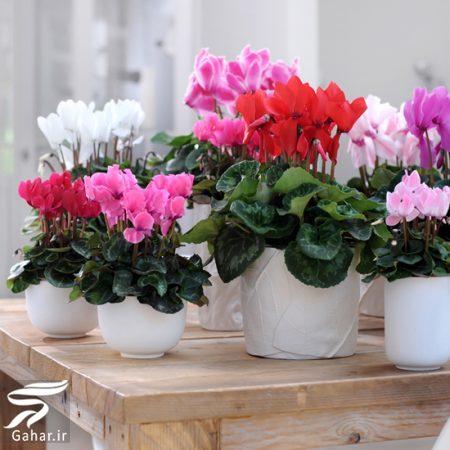 372558 Gahar ir کاشت گل های مناسب فصل زمستان