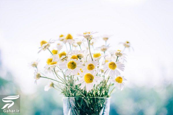 427438 Gahar ir بهترین گل ها برای هدیه دادن و مناسبت ها کدامند؟