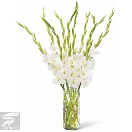 449274 Gahar ir بهترین گل ها برای هدیه دادن و مناسبت ها کدامند؟