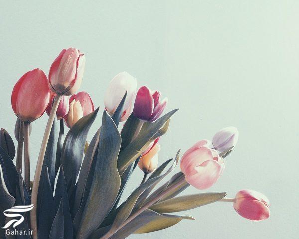 482097 Gahar ir بهترین گل ها برای هدیه دادن و مناسبت ها کدامند؟