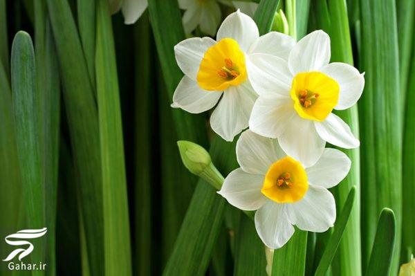 515341 Gahar ir کاشت گل های مناسب فصل زمستان