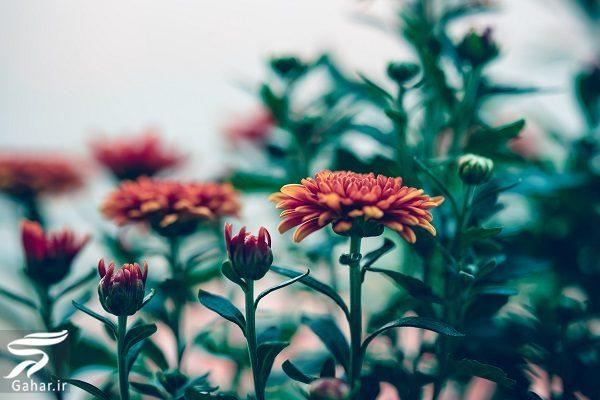 550597 Gahar ir بهترین گل ها برای هدیه دادن و مناسبت ها کدامند؟