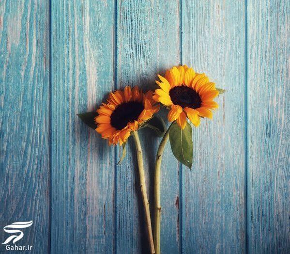 626965 Gahar ir e1573548286984 بهترین گل ها برای هدیه دادن و مناسبت ها کدامند؟