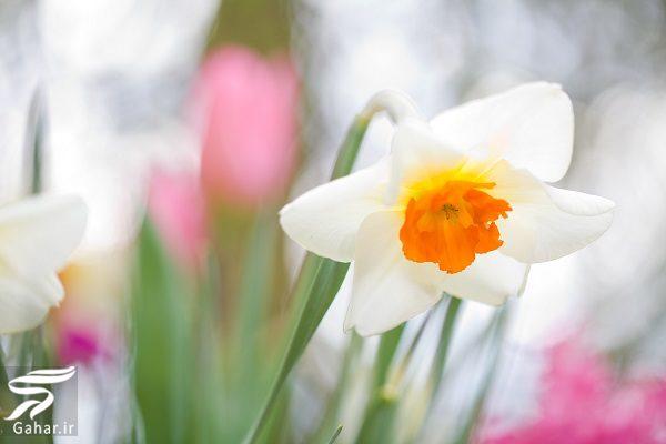 687534 Gahar ir بهترین گل ها برای هدیه دادن و مناسبت ها کدامند؟