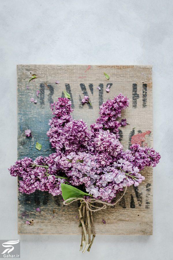 784303 Gahar ir بهترین گل ها برای هدیه دادن و مناسبت ها کدامند؟