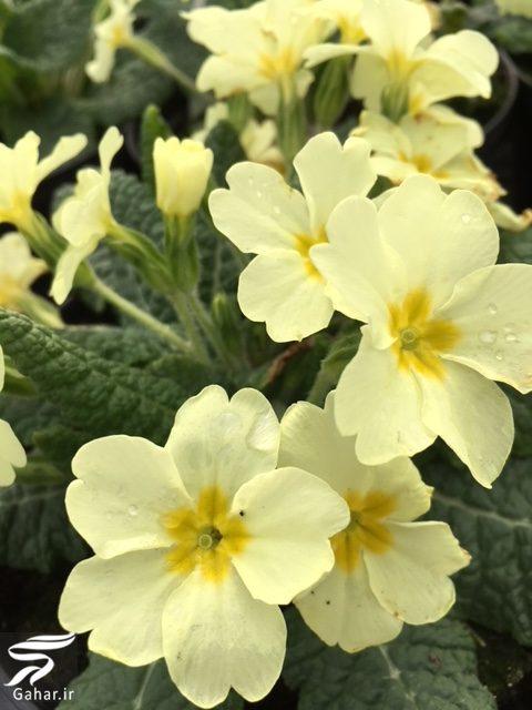 904843 Gahar ir معرفی گیاهانی برای از بین بردن عفونت های بدن