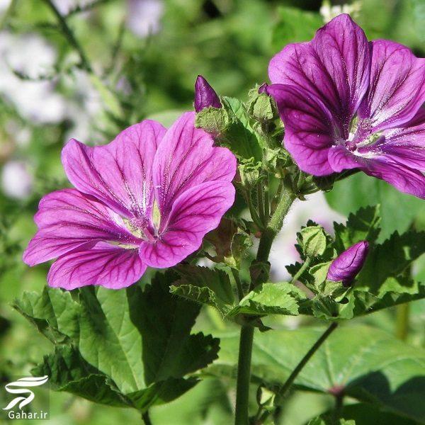 998221 Gahar ir معرفی گیاهانی برای از بین بردن عفونت های بدن