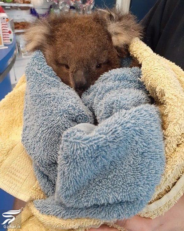 009589 Gahar ir تصاویری دلخراش از آتش سوزی جنگل های استرالیا / 13 عکس