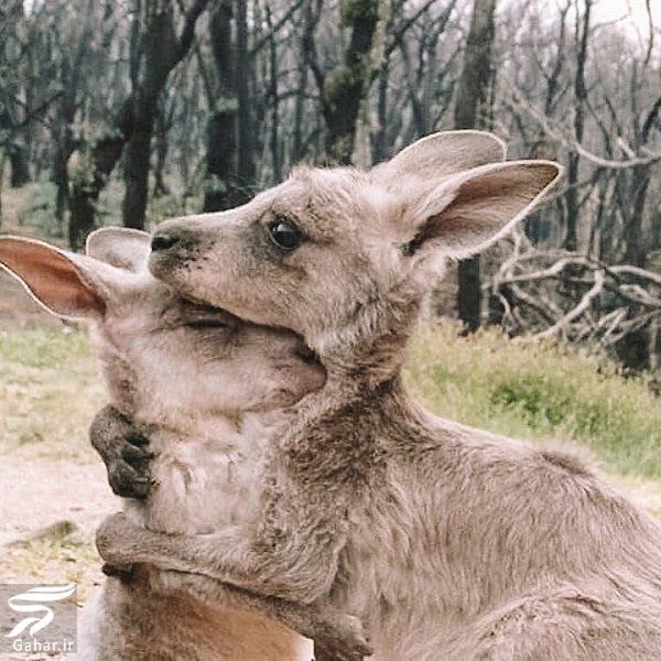 058559 Gahar ir تصاویری دلخراش از آتش سوزی جنگل های استرالیا / 13 عکس