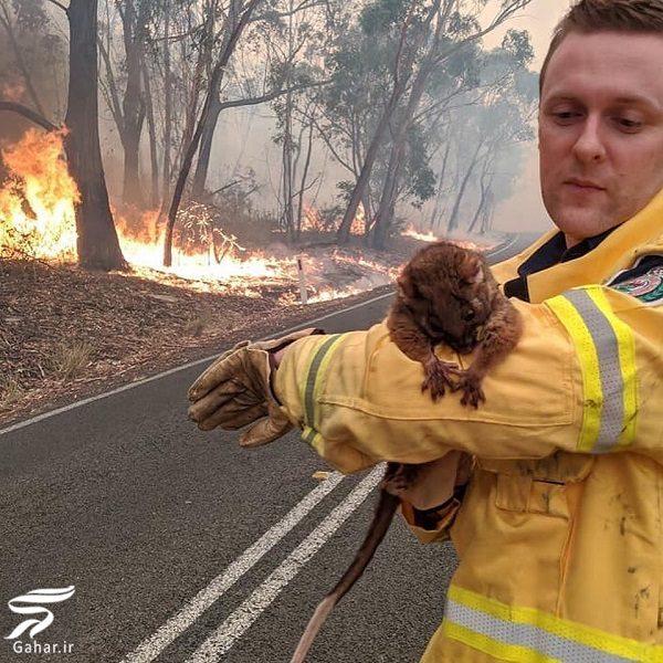 104548 Gahar ir تصاویری دلخراش از آتش سوزی جنگل های استرالیا / 13 عکس