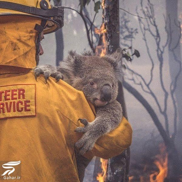 141514 Gahar ir تصاویری دلخراش از آتش سوزی جنگل های استرالیا / 13 عکس