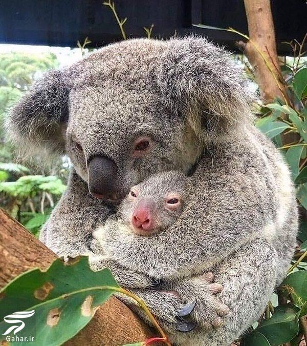 210341 Gahar ir تصاویری دلخراش از آتش سوزی جنگل های استرالیا / 13 عکس