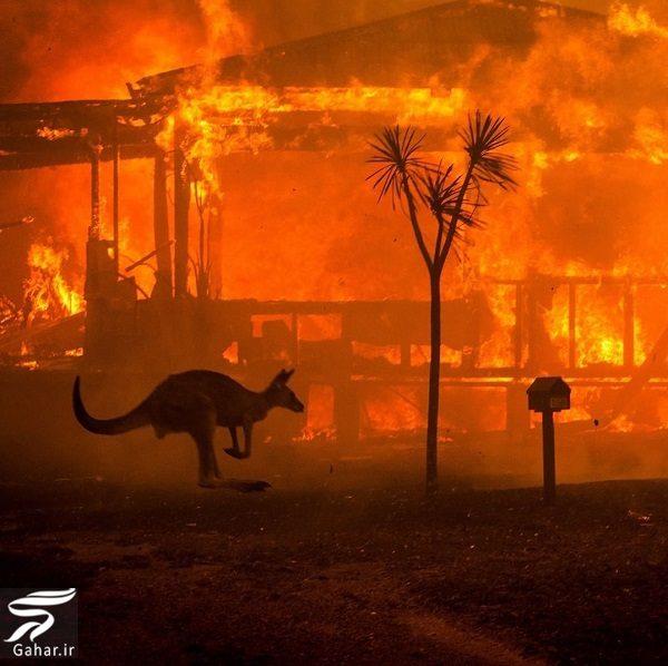 510642 Gahar ir تصاویری دلخراش از آتش سوزی جنگل های استرالیا / 13 عکس