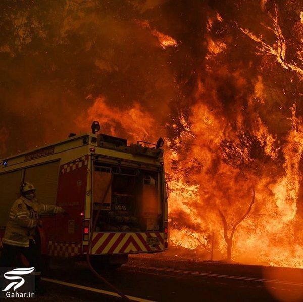 598678 Gahar ir تصاویری دلخراش از آتش سوزی جنگل های استرالیا / 13 عکس